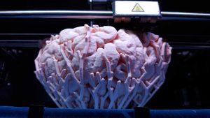 3D-tulostus mahdollistaa tiettyjen tuotteiden ja varaosien tuottamisen tarpeen mukaan siellä, missä niitä tarvitaankin. Myös monimutkaisten mallien tekeminen on helpompaa ja edullisempaa. Kuvassa 3D-tulostettu malli aivoista. Kuva: Nevit / Wikimedia Commons.