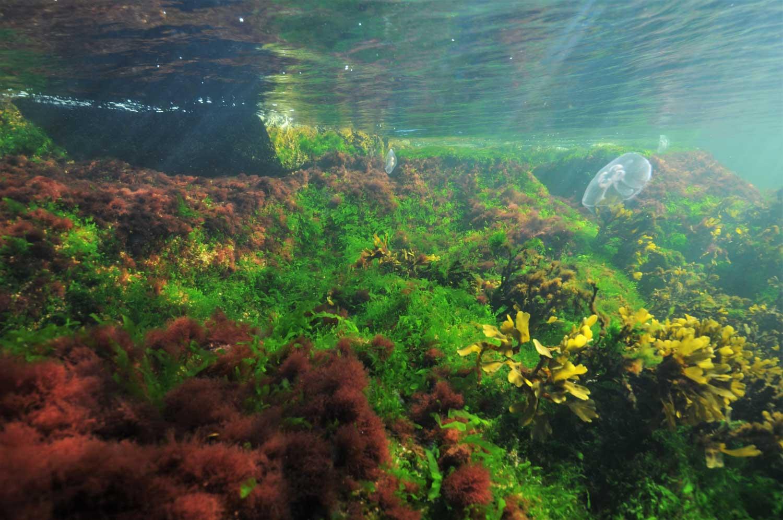 Kuva pinnan alta Itämeren merenpohjasta, jossa on kasvillisuutta.