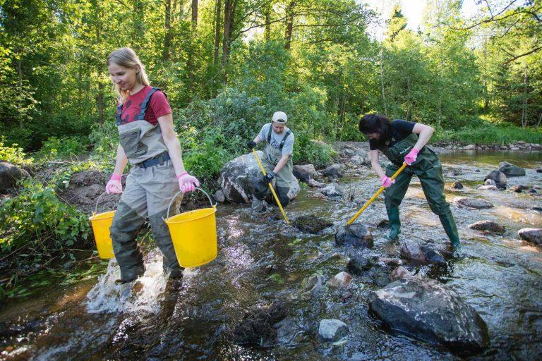 WWF:n vapaaehtoisia kahluuhousuissaan kunnostamassa vaelluskalojen käyttämää pientä koskea.
